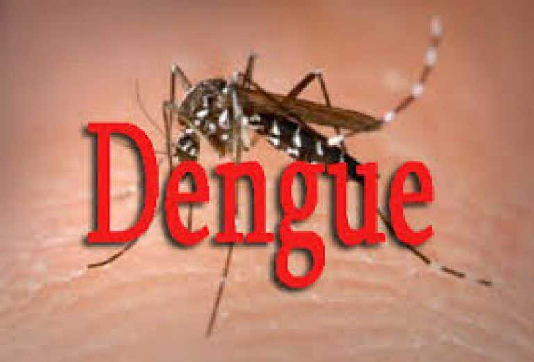 DENGUE WATCH: A microscopic look at a deadly virus that is doing the rounds